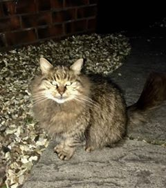 Found January 2017, tabby, st george  I live in Beaconsfield Road he's fluffy but not very big looks well looked after. I'm just checking he has s home.