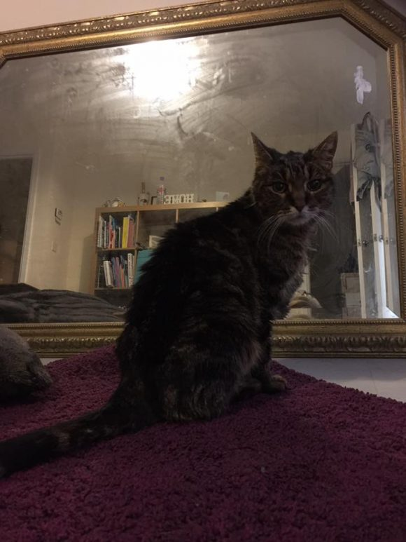 Found  Tabby Brimsham, Yate, Bristol  – 18th January 2016, Female, No Chip