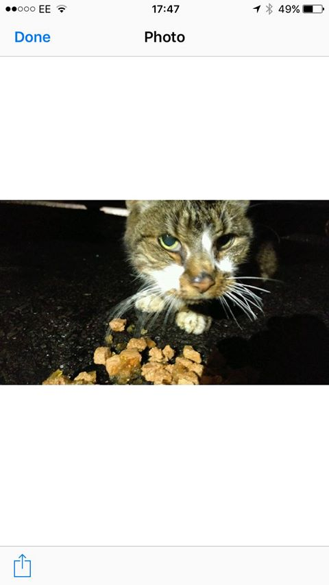 Found tabby/white in Bedminster Dec 2016 – Not removed. so many have gone home