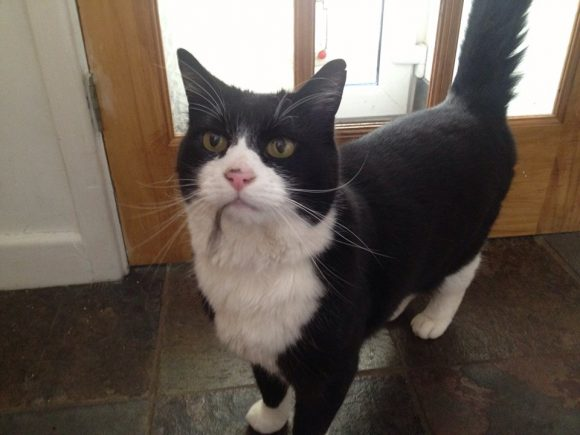 Missing Sept 2015, Downend, black and white cat,