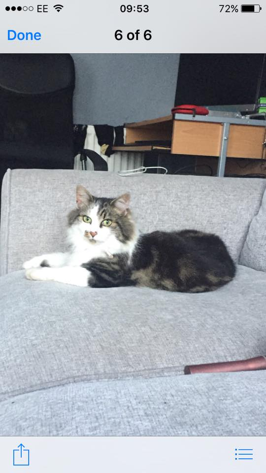 Missing  Sept 2016- Hartcliffe/Bedminster – neutered and chipped