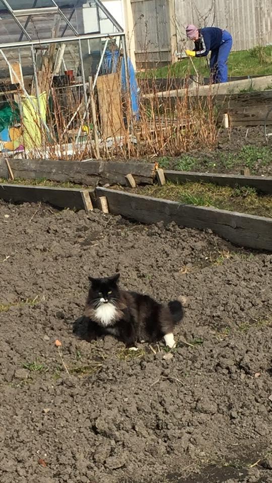 Rest in Peace Rocky. Missing, Jan 2017, Kingswood/Hanham, Black and White Cat