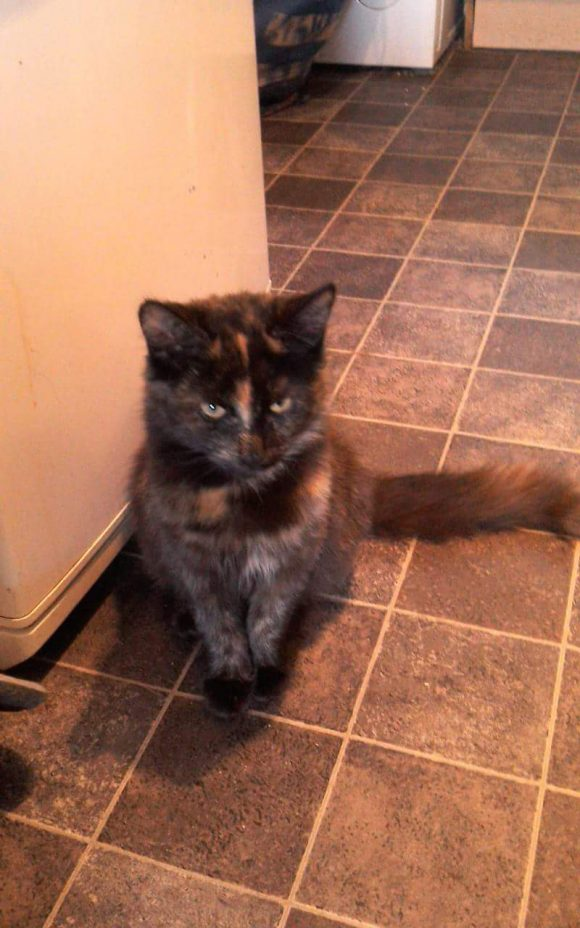 Princess my baby is missing – Burnham on Sea
