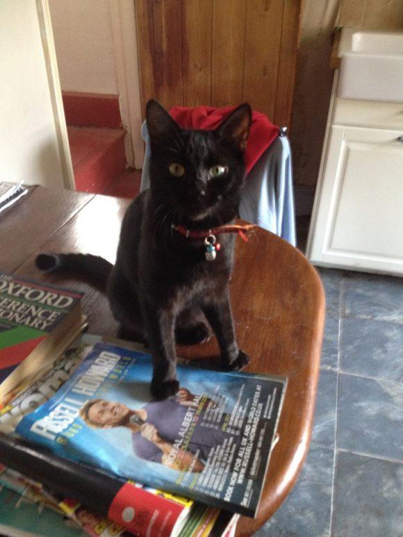 Missing March 2016, Tickenham, Nr Nailsea, Black Cat