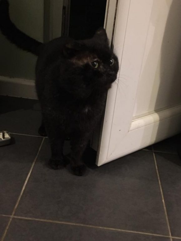 Found Bradwell Grove, Southmead Black Cat. is/her jaws are fat with what feels like abscess. It's gone one half ear and walking with limp as well as covered in scabs – going to try and get it to the vet, giving some food as it's a starvin