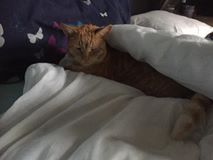 Missing, Jan 2017, Westerleigh, Ginger Cat, Chipped and Neutered