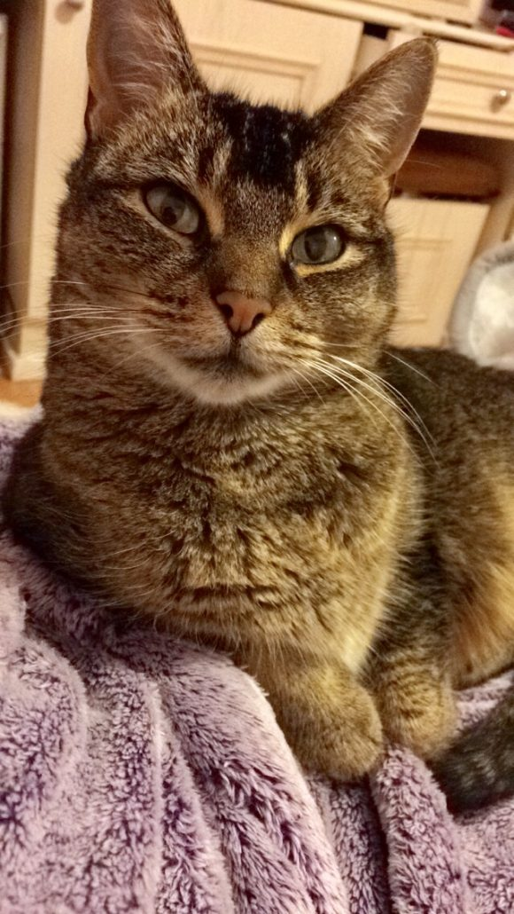 REUNITED – 27th Feb – Lost cat – downend/willy wicket area