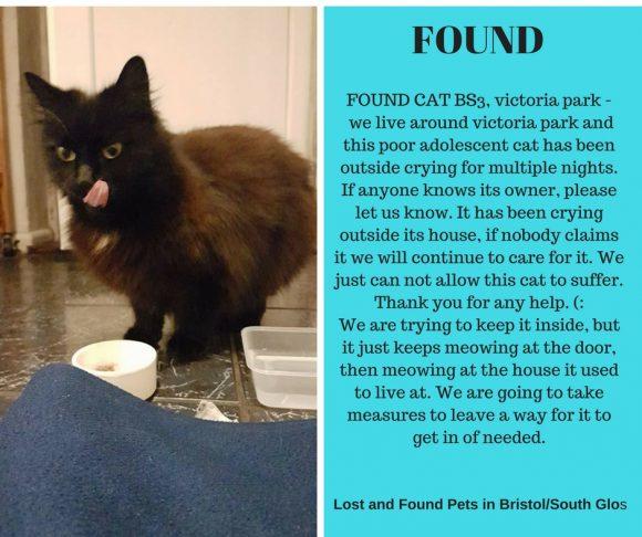 FOUND – 24th February 2017 – BS3, Victoria Park, Bristol – Black fluffy cat – FEMALE