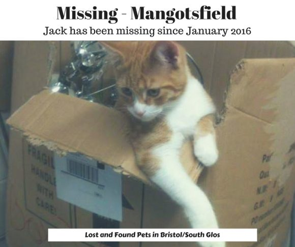 Missing – Mangotsfield – Jan 2016 – Ginger Male Cat