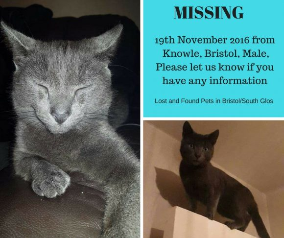 MISSING – 19th November 2016, Knowle, Bristol – Grey Male