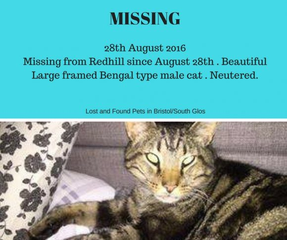 MISSING – 28th August 2016 from Redhill, Bristol – Neutered Male