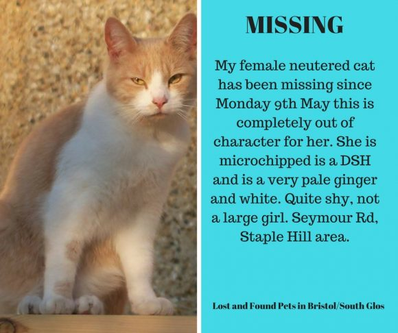 Missing – 9th May 2016, Staple Hill – Chipped and Neutered