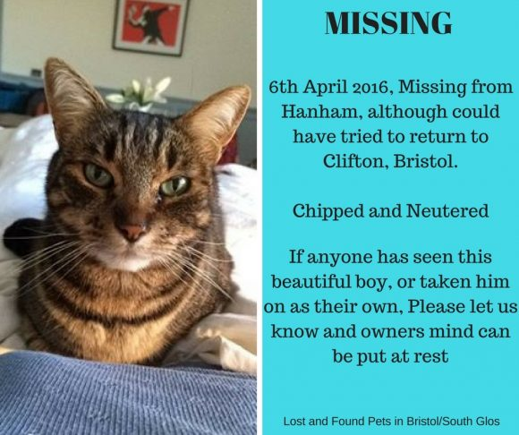 MISSING – 6th April 2016 – Hanham, Bristol, Male, Neutered and Chipped