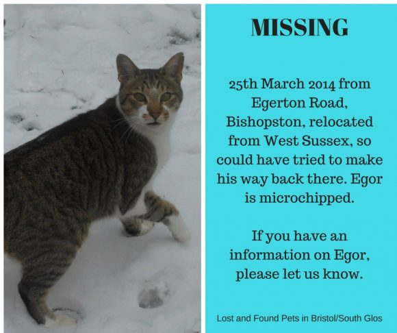 MISSING – March 2014 – Egerton Road, Bishopston, Bristol – microchipped