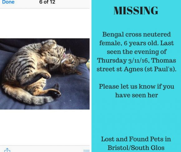 Missing 3 November 2016 – St Pauls, Neutered Female