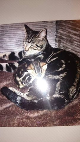 MISSING – Jan 2015 – Male, un-chipped, Knowle