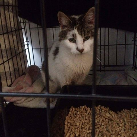 FOUND – Southmead Caught Oct 2016 – around for longer – NOW REHOMED