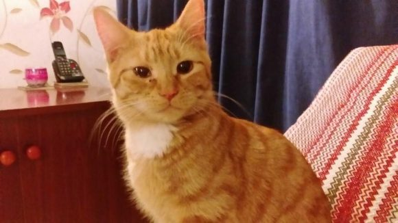 MISSING – 13th March 2016 – Thornbury