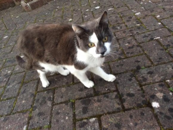 SIGHTED – Henbury – 15th March – Black/white cat