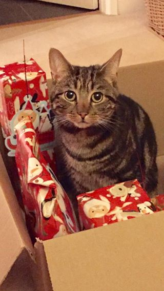 Missing 23 December 2016 – Bishopston/Westbury/Redland – Tabby Chipped