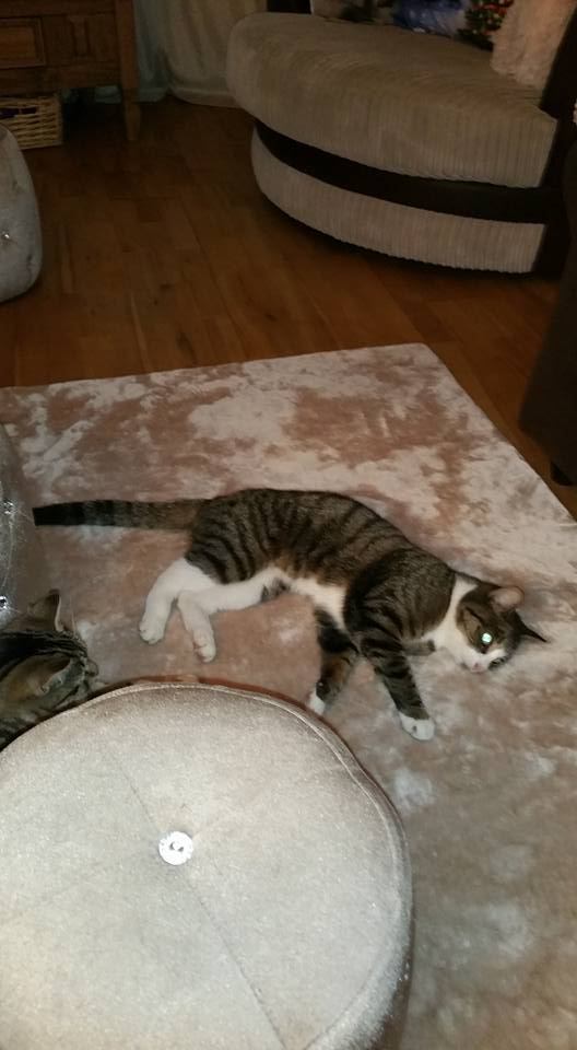 MISSING – 13th April 2017 – Knowle, Tabby, Female,