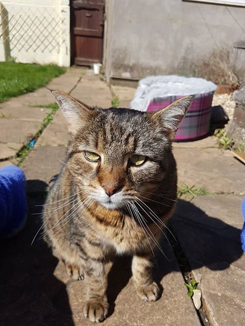 reunited – 11th April 2017 – MISSING – 3rd April 2017 – BS13  – Bedminster Down – Male Tabby Cat