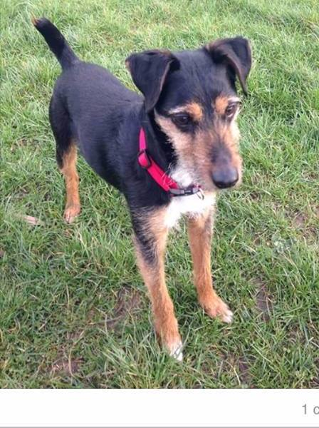 REUNITED 10th April 2017 – 8th April 2017 – Wells Road, Bristol – Male and Microchipped
