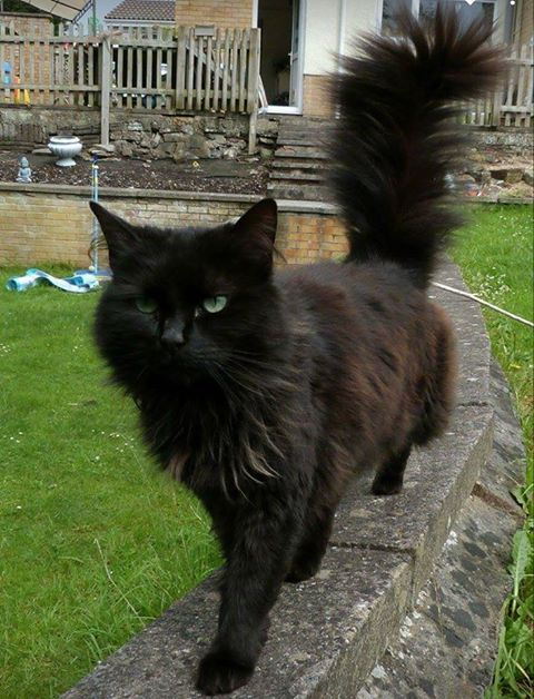 MISSING – May 2017 – Nailsea – Chipped