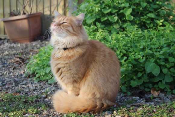 REUNITED – 2rd May 2017 – MISSING – 21st April 2017 – Fishponds – chipped