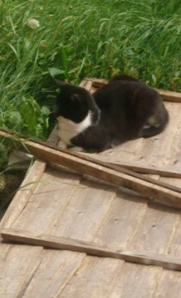 FOUND 2017 – Padstowe Way, Knowle