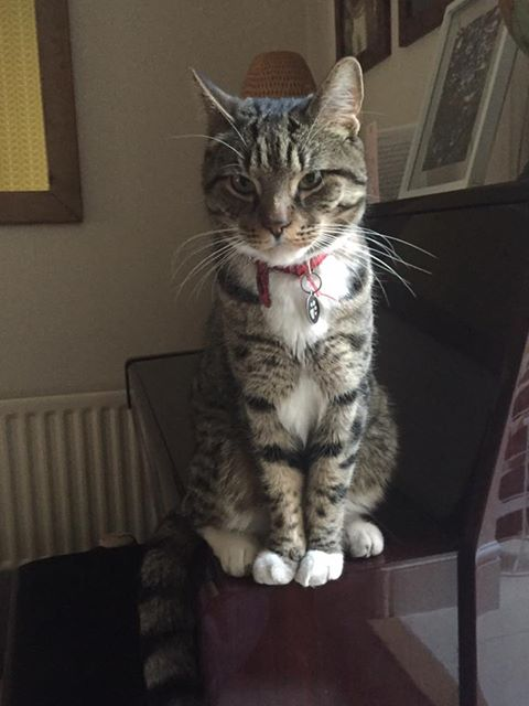 REUNITED – 13th May 2017 – MISSING – 11th May 2017 – St Annes – male – chipped and neutered