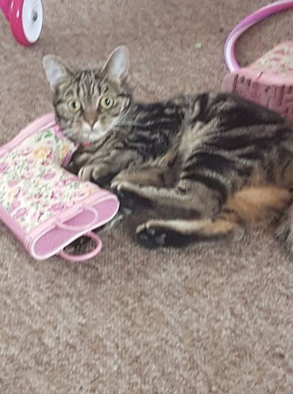 MISSING – 12th May 2017 – Westbury on Trym – Chipped