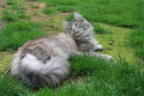 Missing Cat Yate FOUND 20/07 HOME SAFE AND WELL