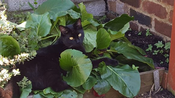 REUNITED –  Missing Cat BS5
