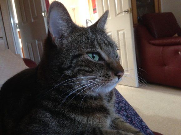 Reunited  Missing tabby cat near Pen Park Road Southmead