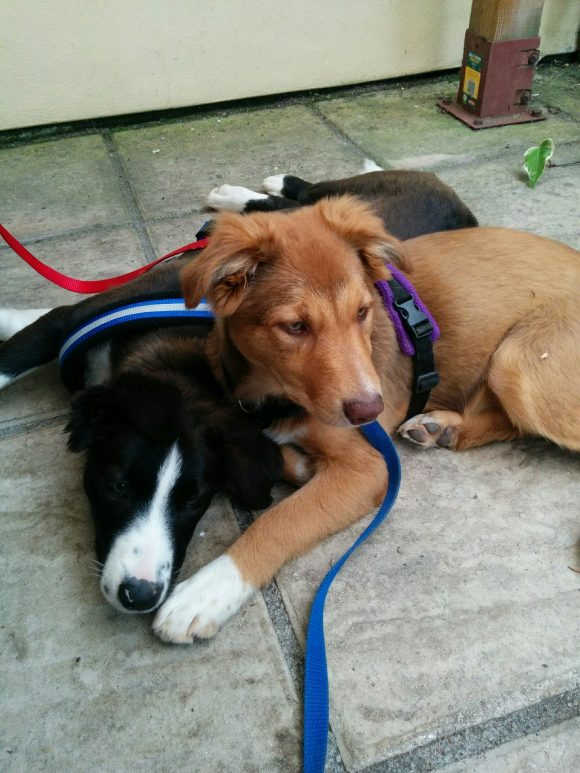 Reunited  Puppies missing from Aust