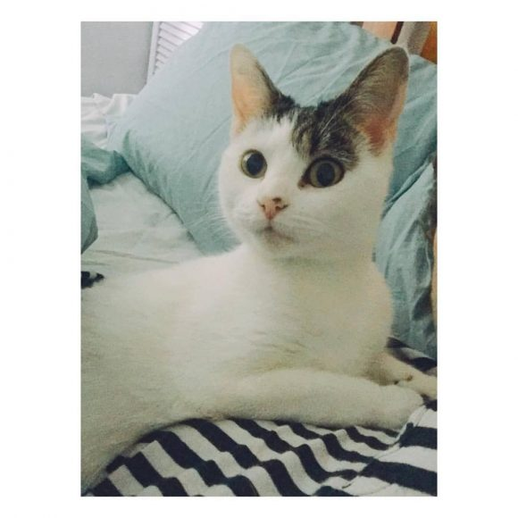 MISSING CAT – BETTY – REDLAND PARK