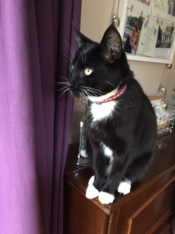 Missing black and white cat – Clifton