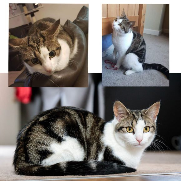 Missing cat in Fishponds