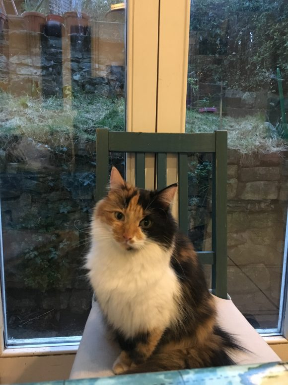 Missing Tortoise shell cat