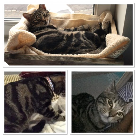 MISSING CAT – St George, Bristol