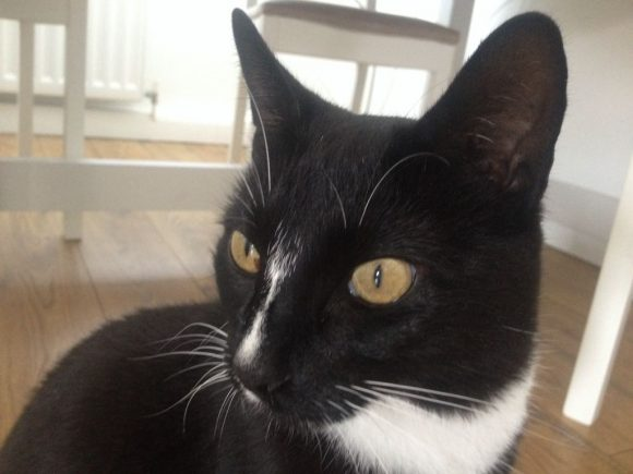 Found Black White Cat in BS9. She is very friendly and made herself at home.