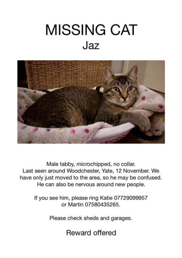 Missing cat – Jaz