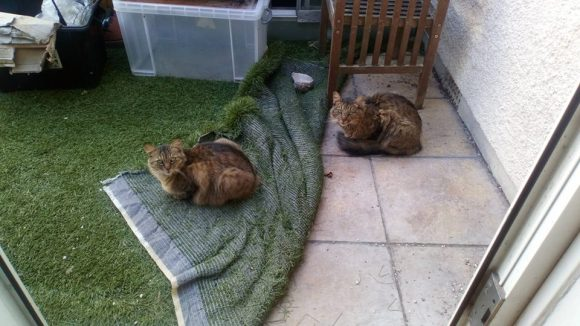 Missing: 30/10/2018: Male Long Haired Tabby Cat: Easton, Bristol