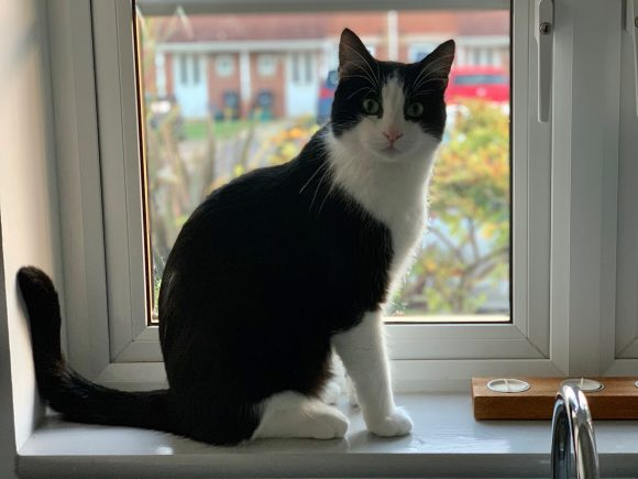Missing Black and White male cat