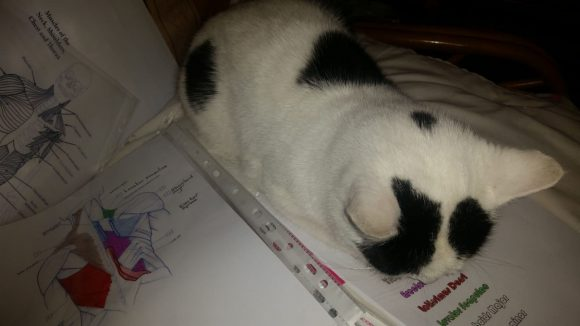 missing cat downend area bristol since feb 27-28