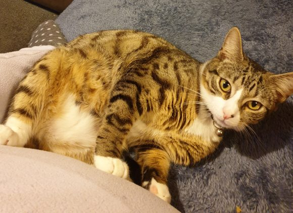 Missing tabby henbury area