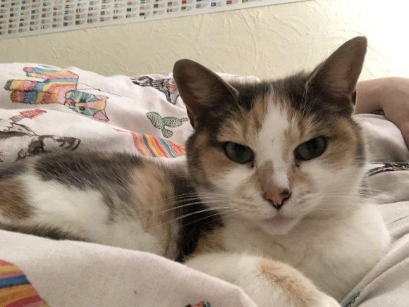 Missing cat Kingswood/st George area