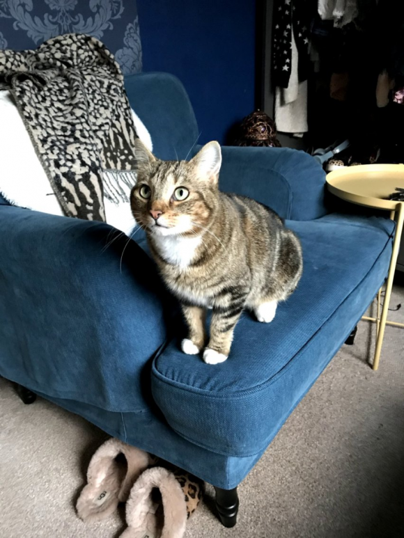 Male tabby with white chest and socks, went missing yesterday in the Filton area of Bristol.