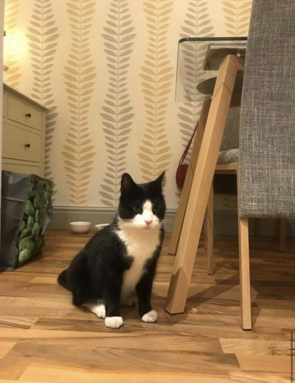 LOST cat Cromwell Road, BS6 – Black and white with yellow collar